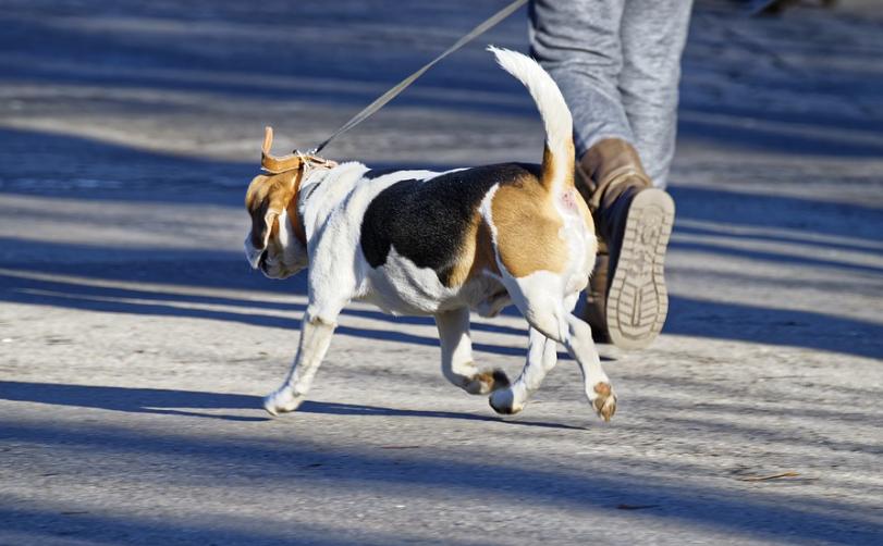 Coiffure pour les nez en fourrure : le coiffeur pour chiens